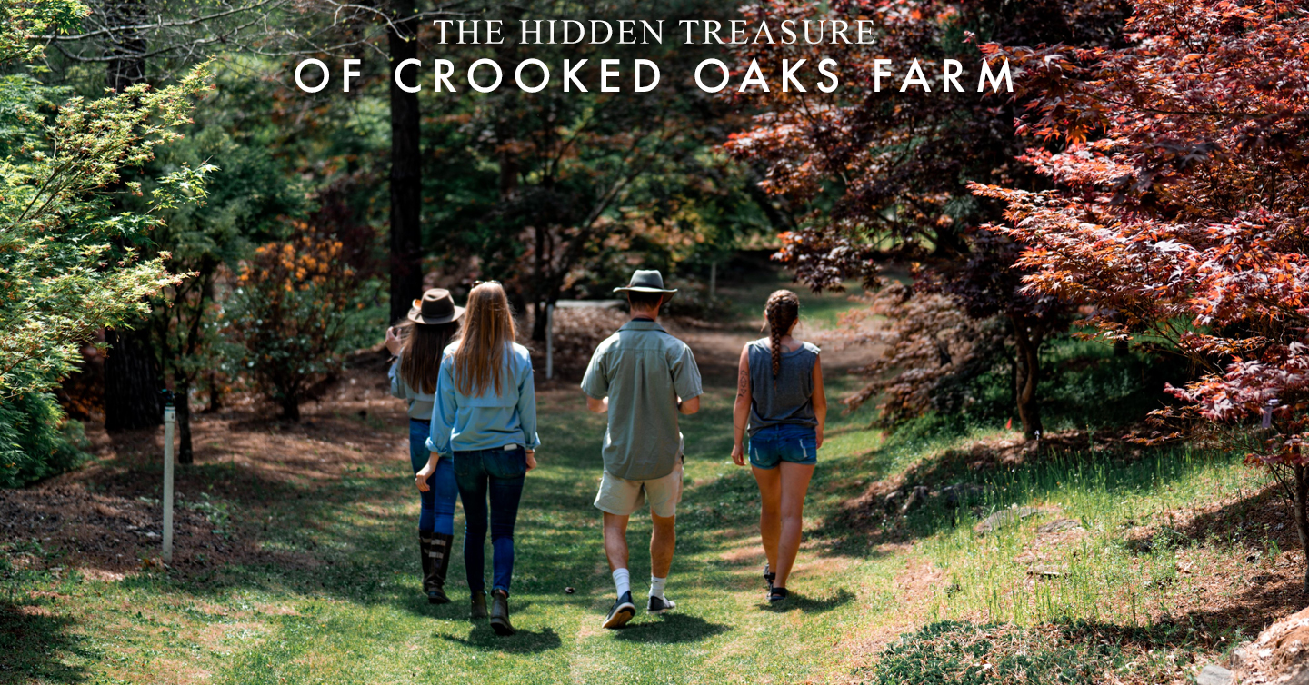 The Hidden Treasure of Crooked Oaks Farm