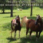 Property Spotlight: Horse Boarding at Crooked Oaks