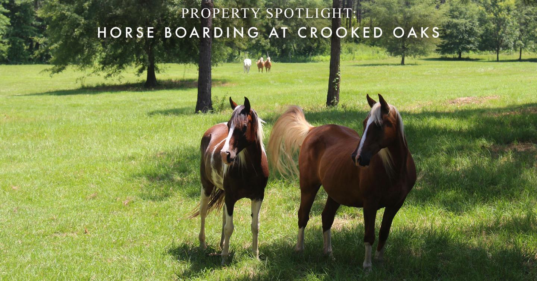 Property Spotlight: Horse Boarding at Crooked Oaks