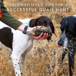 Crooked Oaks' Tips for a Successful Quail Hunt