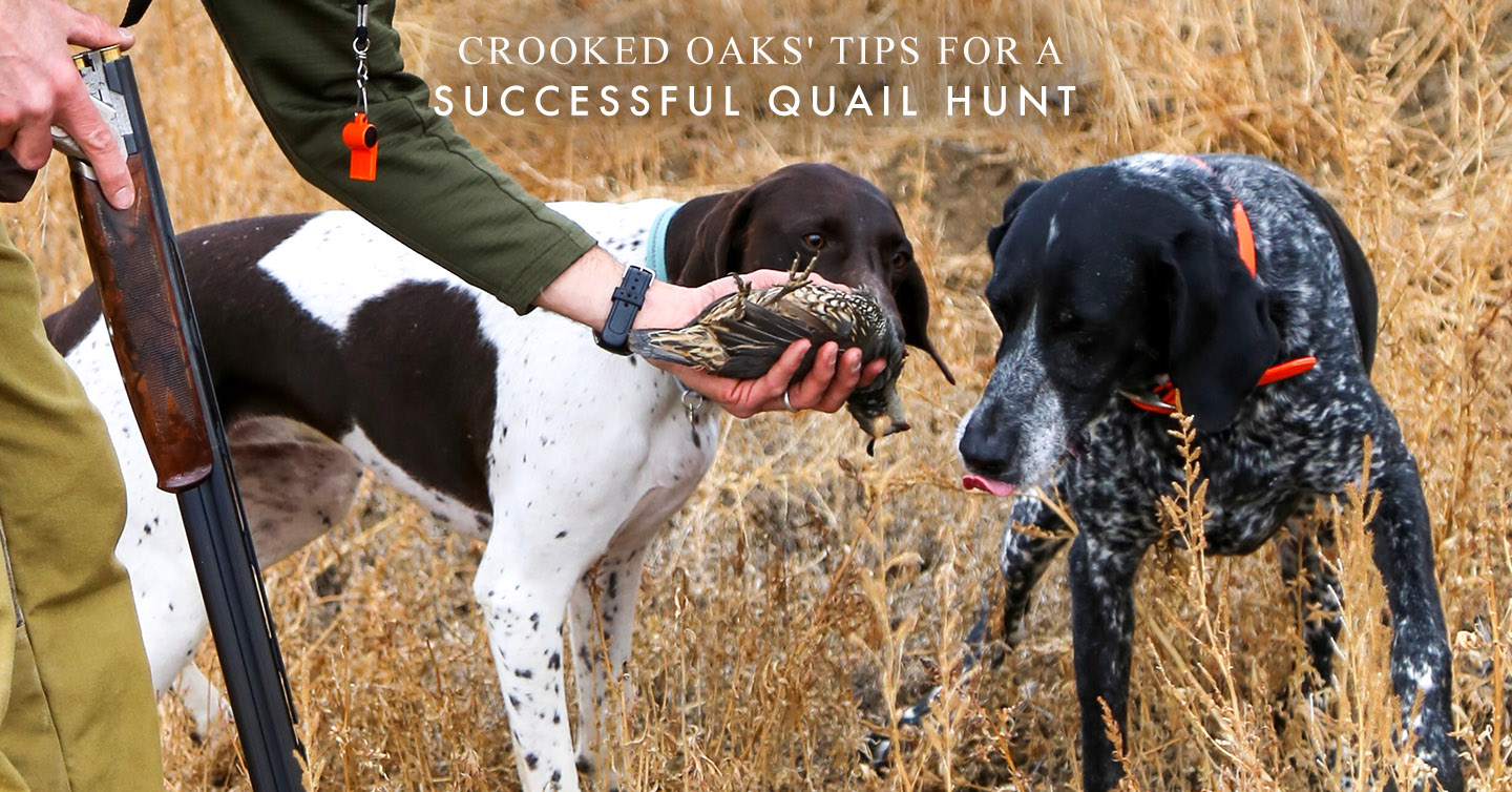 Read more about the article Crooked Oaks' Tips for a Successful Quail Hunt